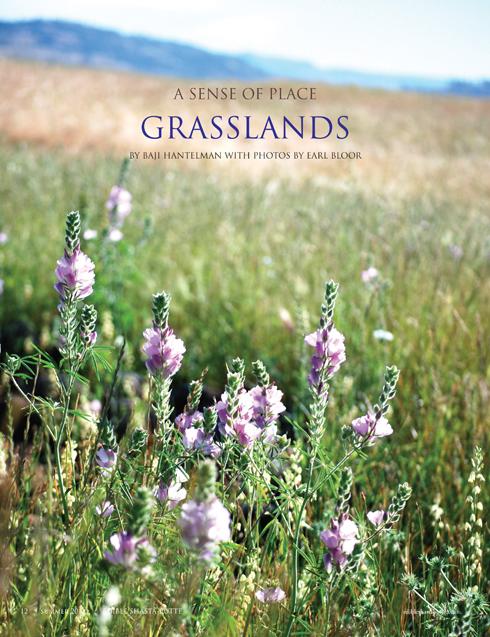 grasslands72dpi