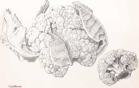 cauliflower_p30_72dpi