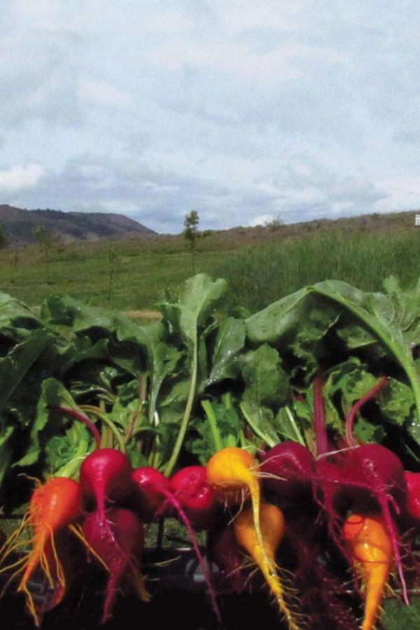 beets-homeward-bounty