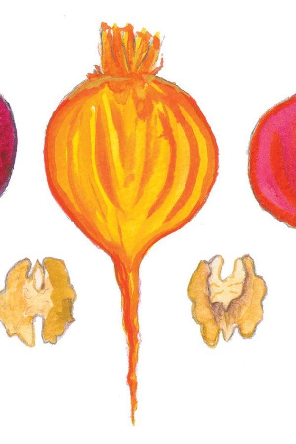 walnut-beet-illustration