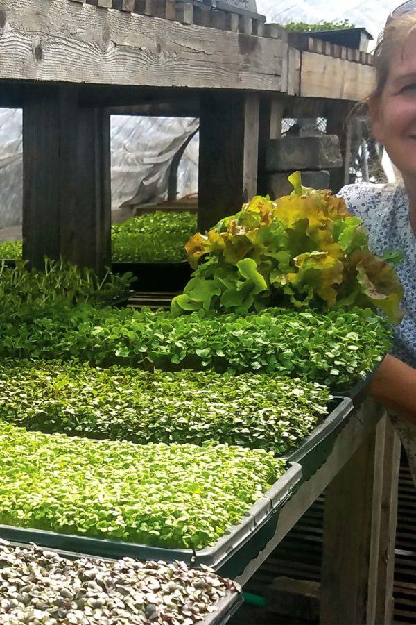 mount-shasta-farmres-market