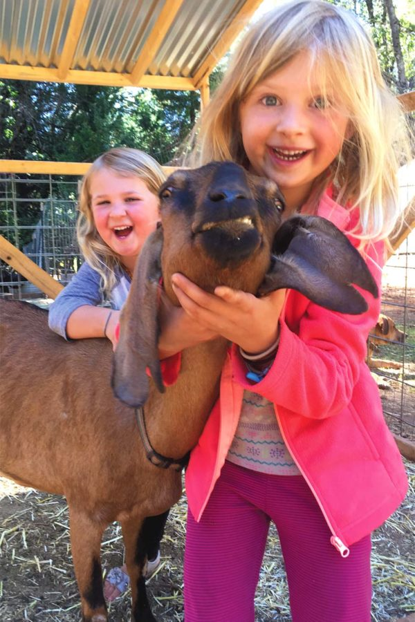 Ruby and Alabama make nice with one of Cove Crest's goats